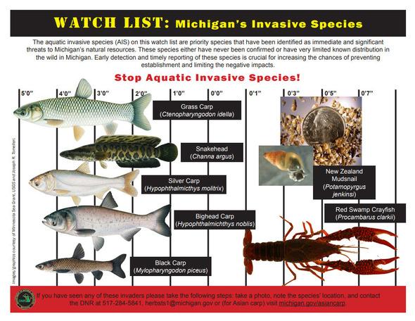 invasivespecies