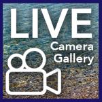 livecameragallery